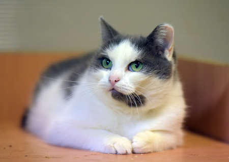 cute white with gray cat close