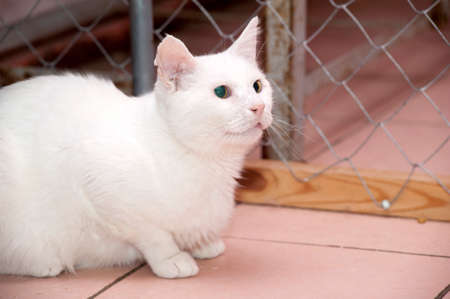 white cat in an animal shelter close up