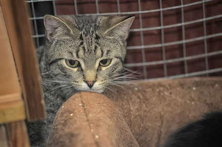 tabby cat in a cage in a shelter Reklamní fotografie