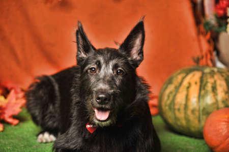 cute black dog mongrel mestizo terrier