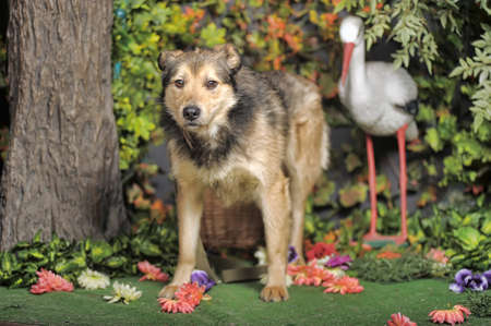 Brown dog crossbreed husky on a background of greenery