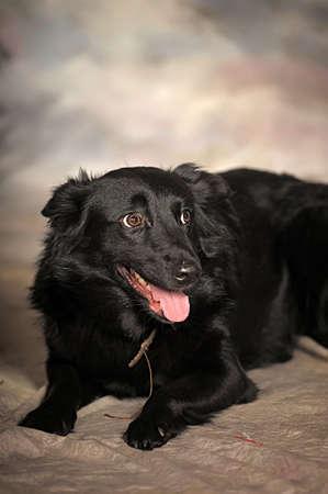 black mongrel dog in the studio photo
