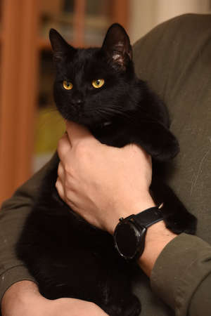 young playful black cat in hands