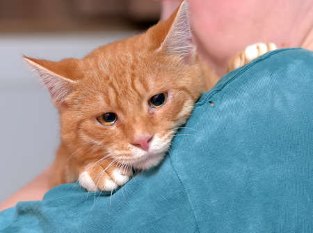 sad redhead with a white cat in his hands