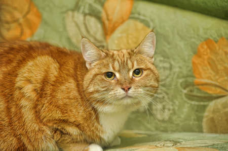 red and white cute cat