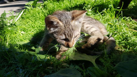 stray kitten in the grass