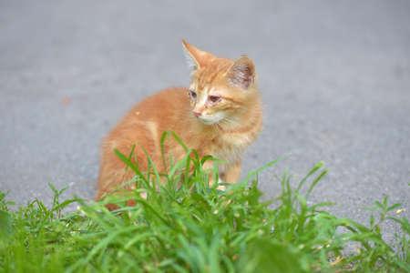 Homeless, sick, hungry red kitten Фото со стока