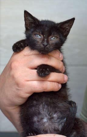 cute black kitten in hands
