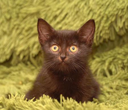 little cute black kitten on a green fluffy blanket