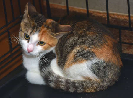 small tricolor scared kitten in a cage at an animal shelter