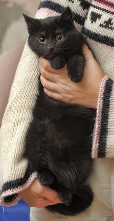 black fluffy cute cat in hands close up