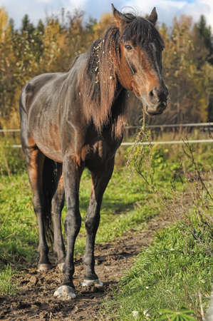 a brown and skinny horse is standing in a field with green grass