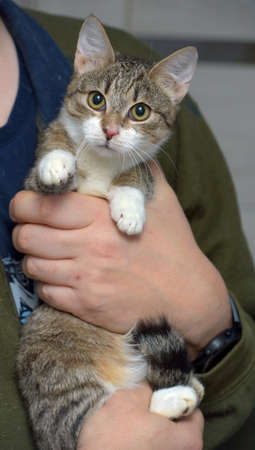 cute young striped with a white cat in her arms Imagens