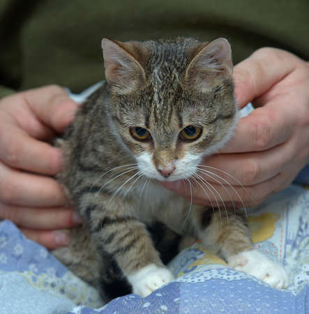 cute young striped with a white cat in her arms