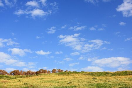 Green grass field at the summer day Stock Photo