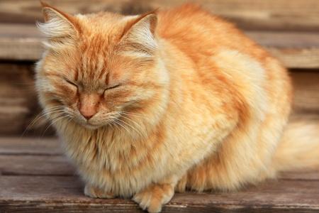 Orange tabby cat sleeping on the stairs