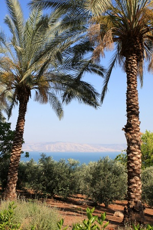 View of Kineret lake (sea of Galilee) through the palm trees, Israel
