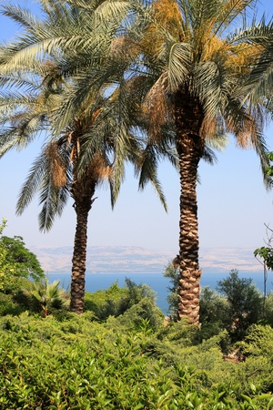 View of Kineret lake (sea of Galilee) through the palm trees, Israel photo