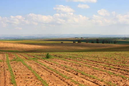 israel agriculture: View of agricultural field at spring, Israel