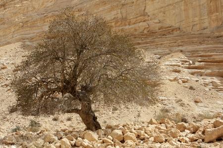 Ein Avdat canyon in the Negev Desert, Israel photo
