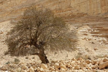 canyon negev: Ein Avdat canyon in the Negev Desert, Israel