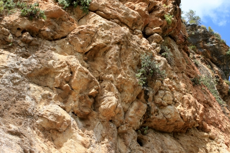 Photo of the rock with green plants, Israel