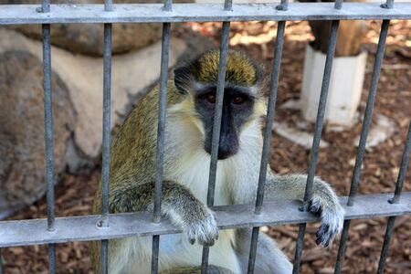 Monkey sitting in the cage at zoo photo