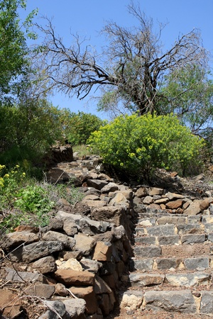nature reserves of israel: Stairs at the Gamla Nature Reserve, Israel