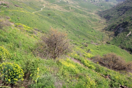 nature reserves of israel: View of Gamla natural reserve in the Golan Heights, Israel