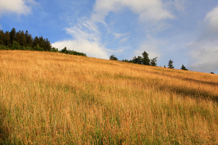 View of Black Forest (Schwarzwald) at summer, Germany