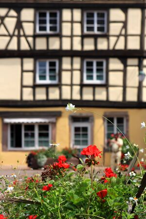 alsace: Flowers and Colmar typical architecture on the background Alsace France