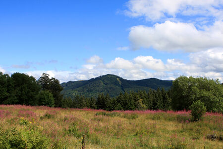 Flowers in the fields of Black Forest (Schwarzwald) at summer, Germany Stock Photo