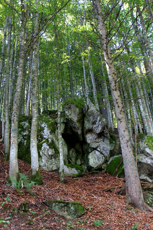 Black Forest (Schwarzwald) in Germany