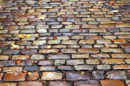 Wet pavement after rain with yellow foliage Stock Photo