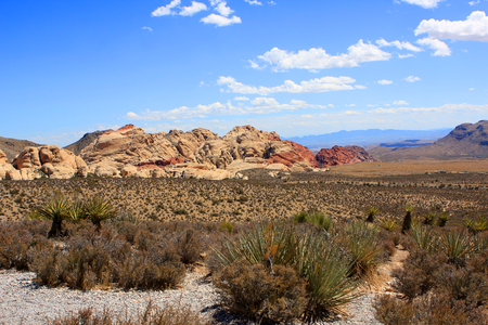 red rock national conservation area: View of  the Red Rock Canyon National Conservation Area in Nevada, USA
