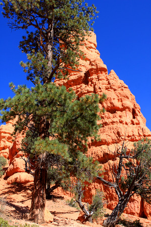 byway: Red Canyon at Scenic Byway 12, Dixie national forest, Utah, USA Stock Photo