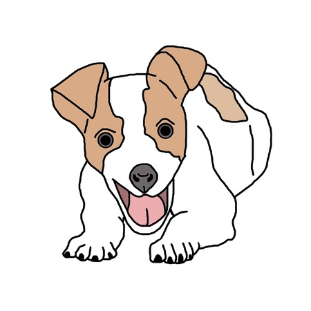 jack russel: Jack Russell dog