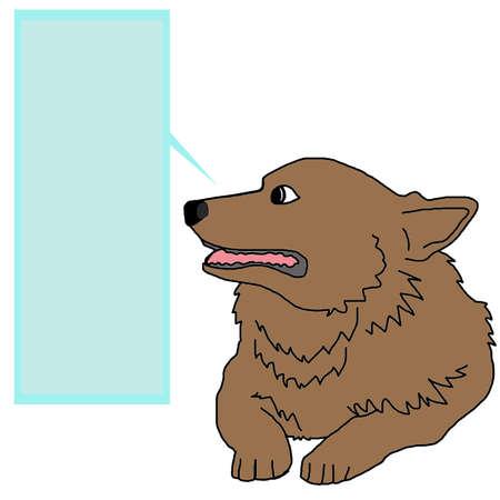 serology: dog corgi breed smiling