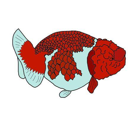 sedate: gold fish on white