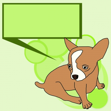 boston terrier: Dog Chihuahua.