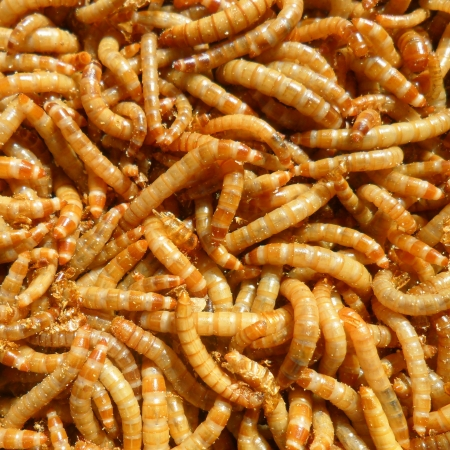 many ugly worms as background Stock Photo - 17098625