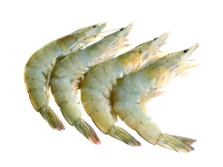 fresh shrimp isolated on a white background photo