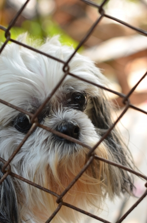 lonely dog in cage Stock Photo - 18004570