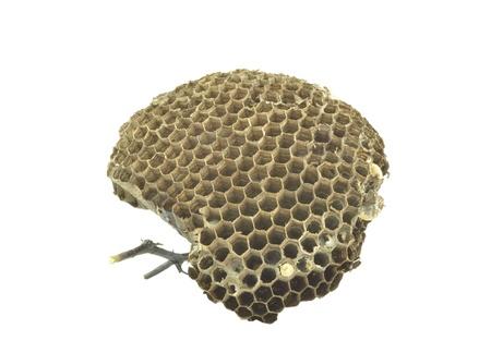 wasp nest on white background photo