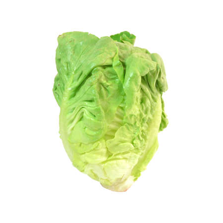 cos: Cos Lettuce on White Background Stock Photo