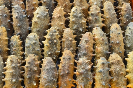 Dried sea cucumber. Stock Photo