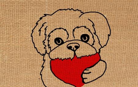 lap dog: Shih Tzu dogs.