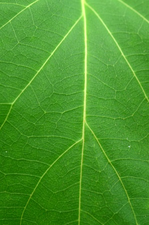 structured: Green leaf an abstract background