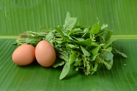 sanctum: Ocimum sanctum eggs in Green leaf an abstract background Stock Photo