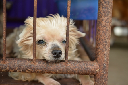mill: lonely dog in cage